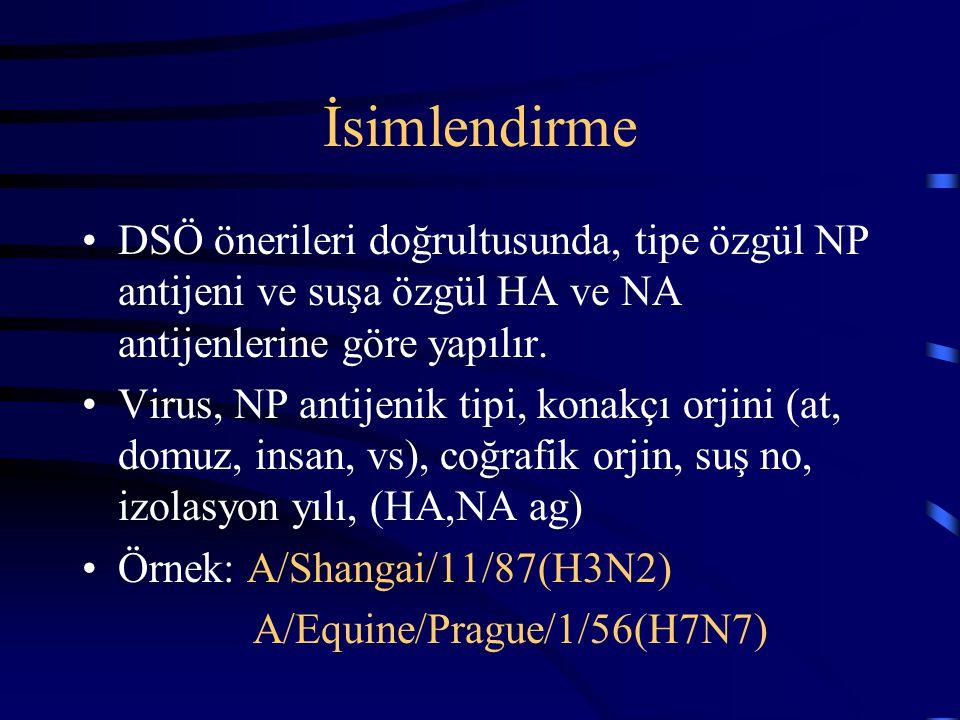İsimlendirme DSÖ önerileri doğrultusunda, tipe özgül NP antijeni ve suşa özgül HA ve NA antijenlerine göre yapılır.