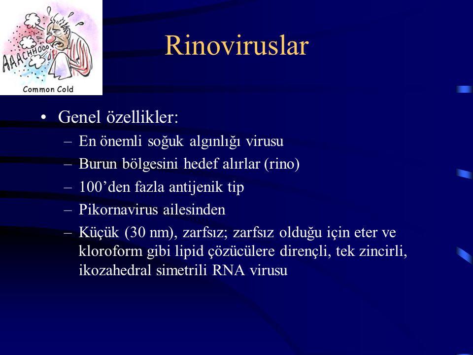 Rinoviruslar Genel özellikler: En önemli soğuk algınlığı virusu