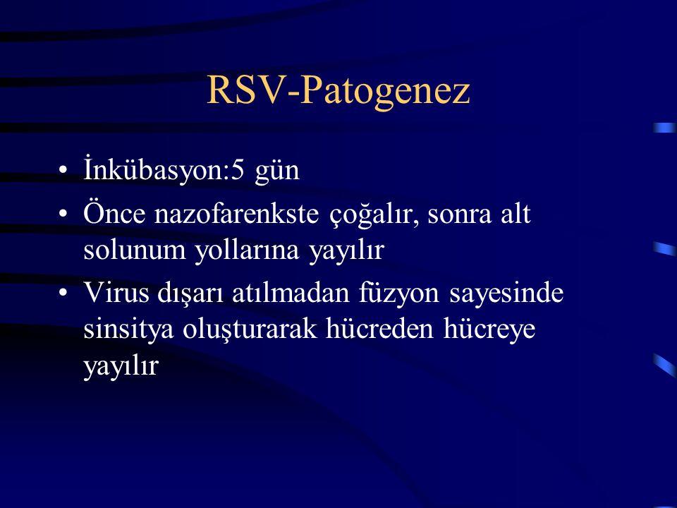 RSV-Patogenez İnkübasyon:5 gün