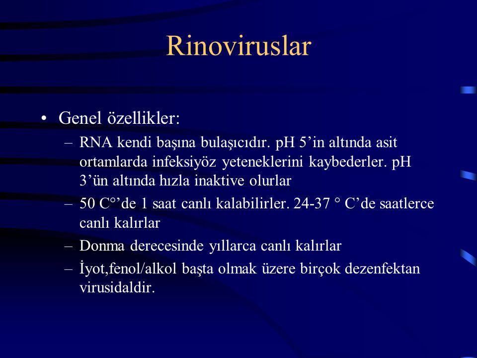 Rinoviruslar Genel özellikler: