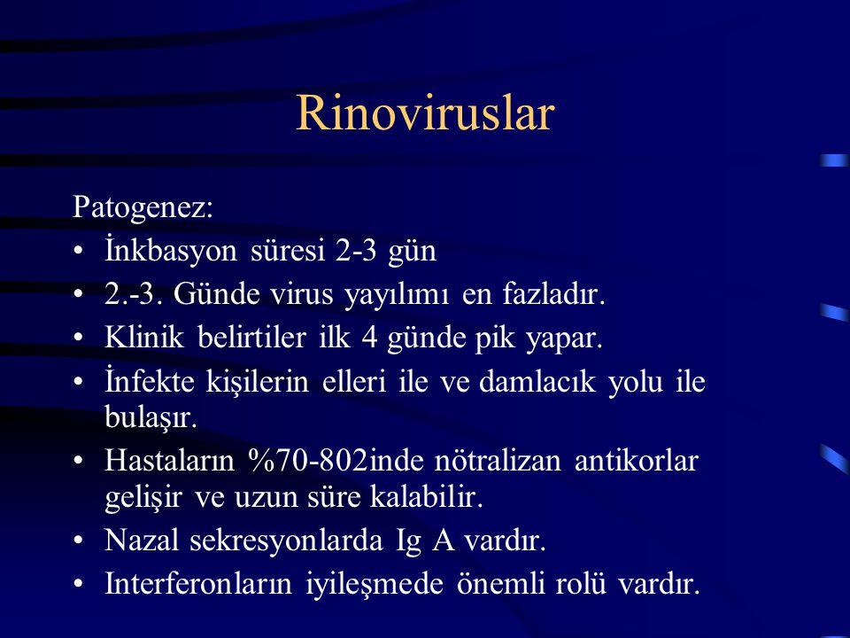 Rinoviruslar Patogenez: İnkbasyon süresi 2-3 gün