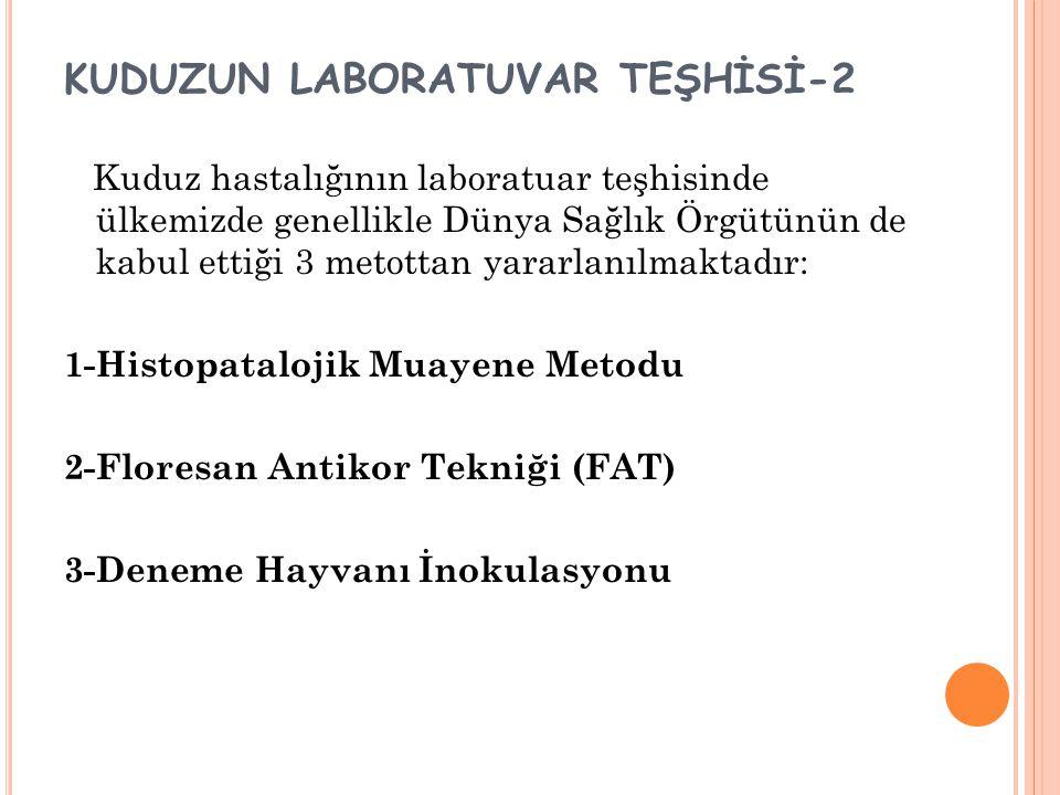 KUDUZUN LABORATUVAR TEŞHİSİ-2