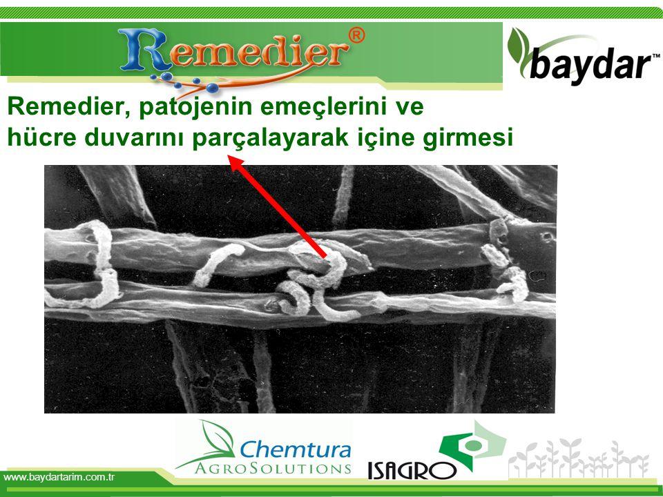 ® Remedier, patojenin emeçlerini ve hücre duvarını parçalayarak içine girmesi