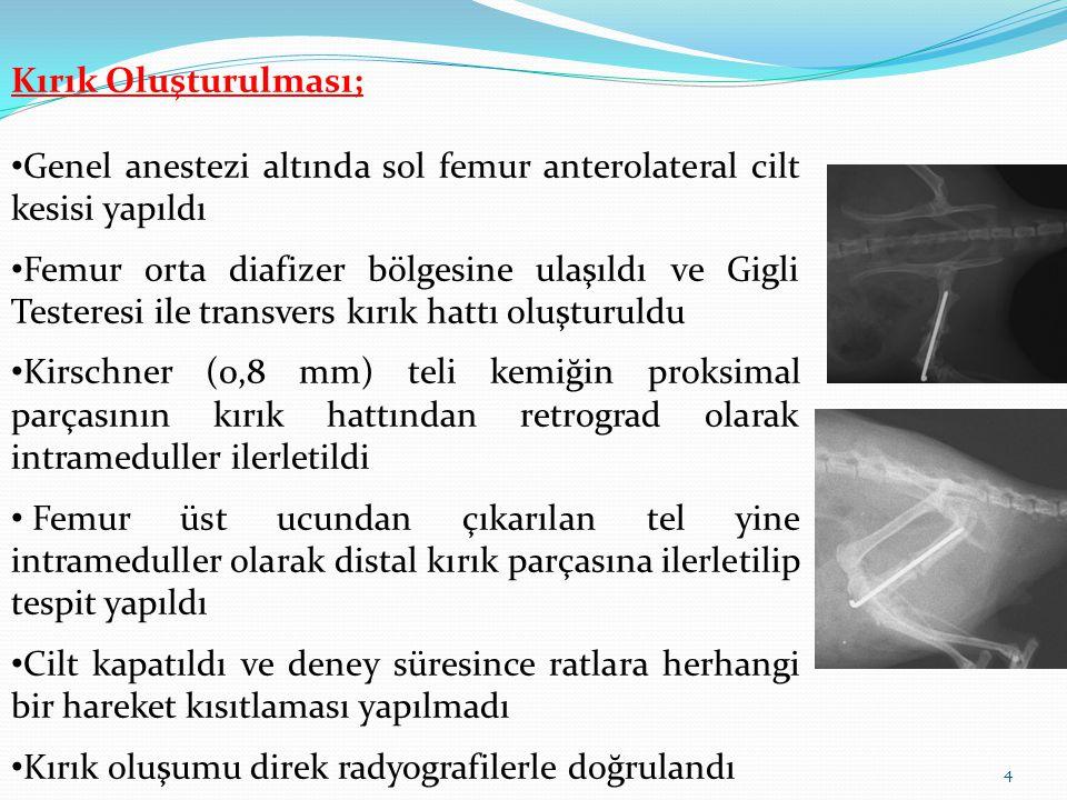 Kırık Oluşturulması; Genel anestezi altında sol femur anterolateral cilt kesisi yapıldı.
