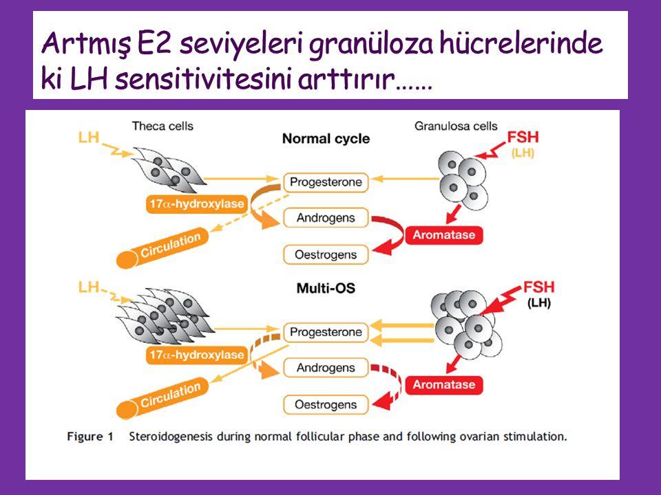 Artmış E2 seviyeleri granüloza hücrelerinde ki LH sensitivitesini arttırır……