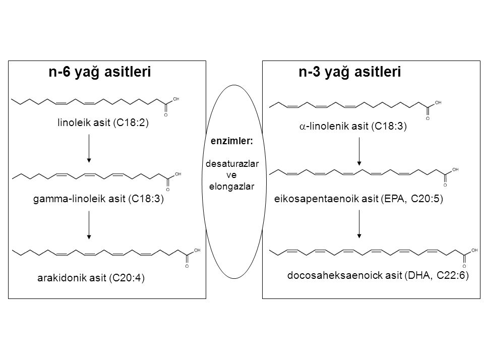 n-6 yağ asitleri n-3 yağ asitleri linoleik asit (C18:2)