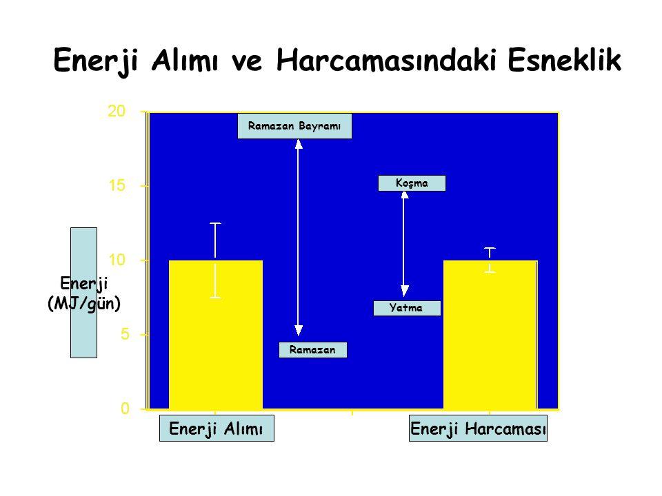 Enerji Alımı ve Harcamasındaki Esneklik