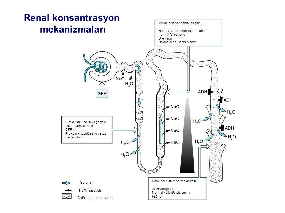 Renal konsantrasyon mekanizmaları
