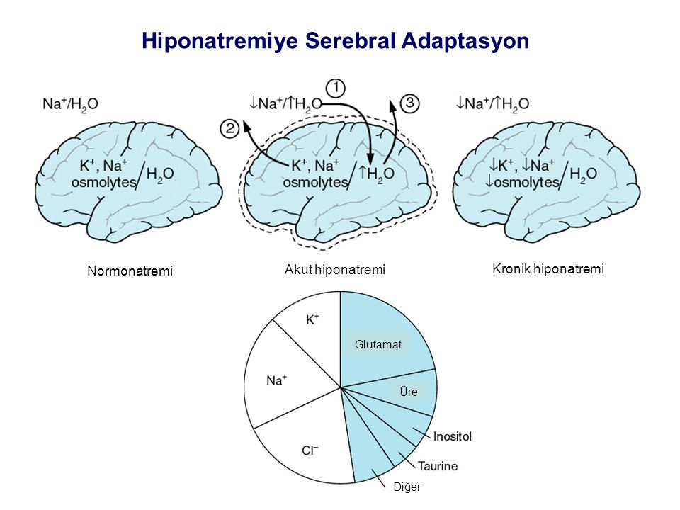 Hiponatremiye Serebral Adaptasyon