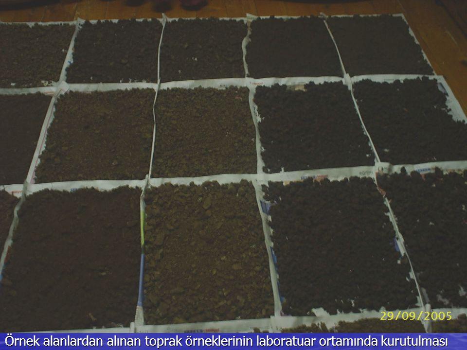 Örnek alanlardan alınan toprak örneklerinin laboratuar ortamında kurutulması