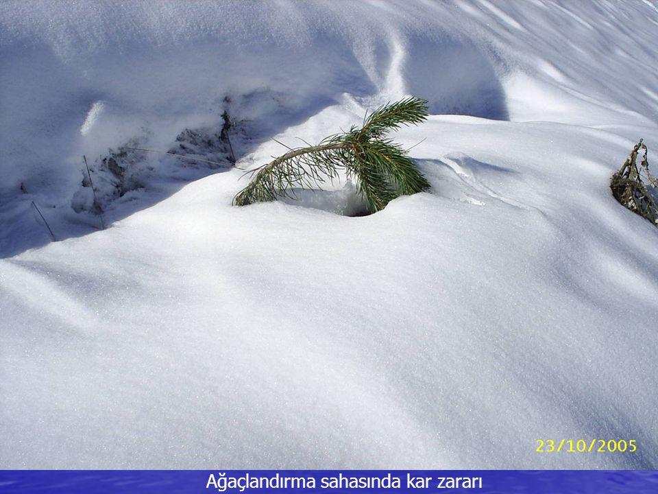 Ağaçlandırma sahasında kar zararı