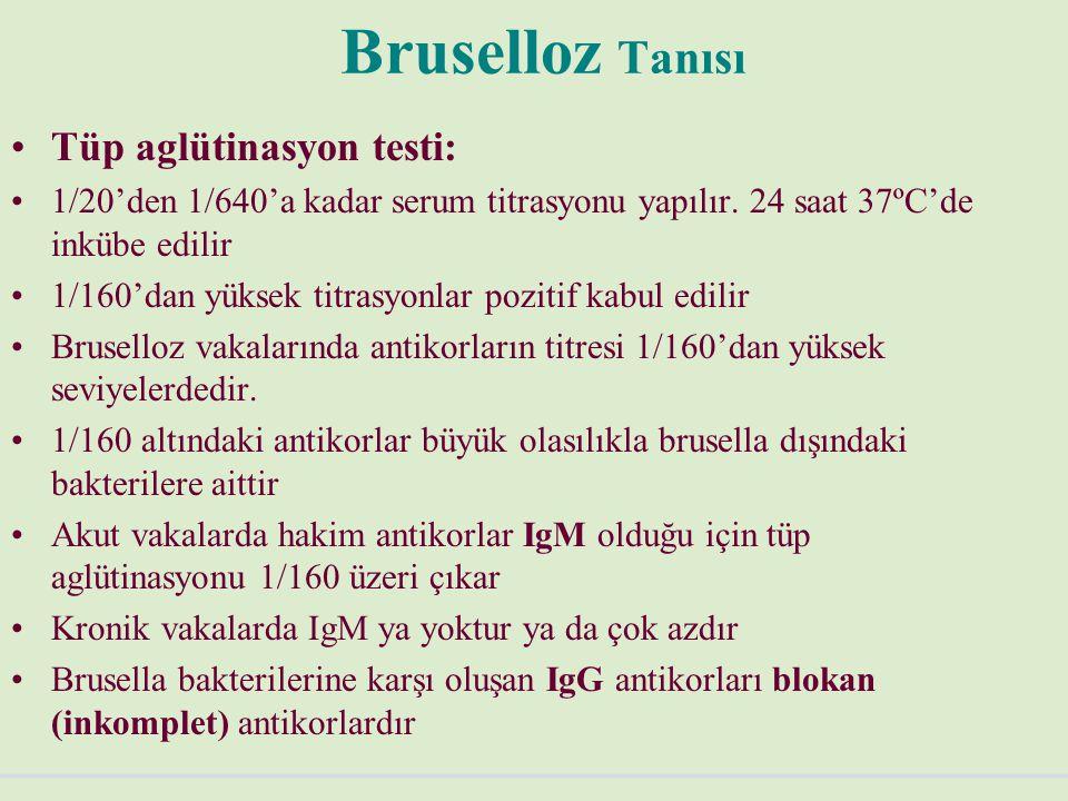 Bruselloz Tanısı Tüp aglütinasyon testi: