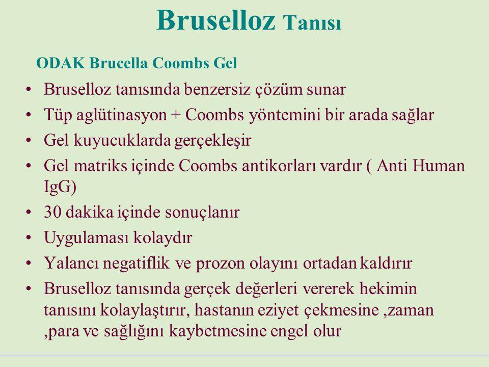 Bruselloz Tanısı ODAK Brucella Coombs Gel