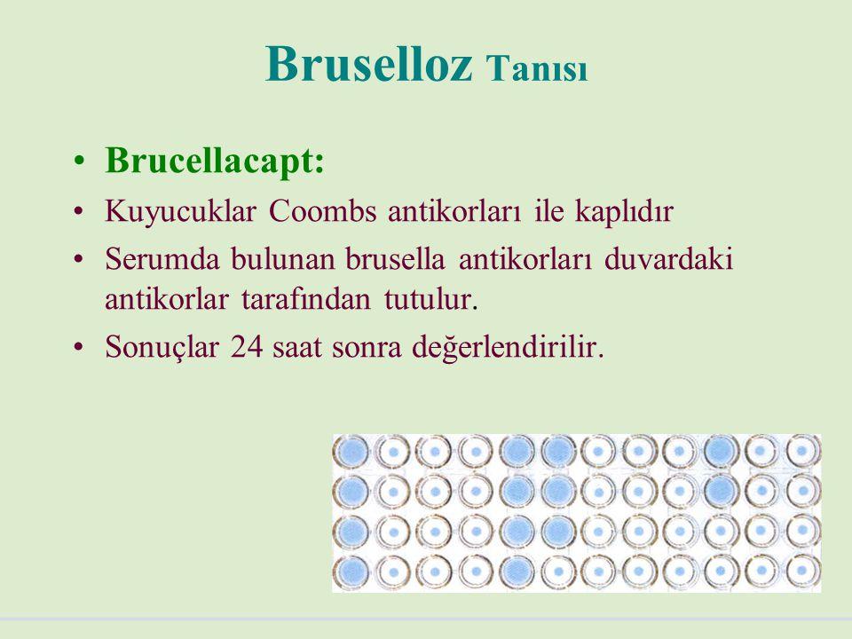 Bruselloz Tanısı Brucellacapt: