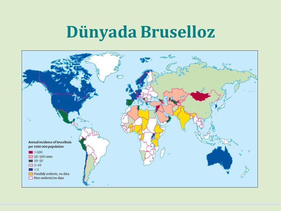 Dünyada Bruselloz