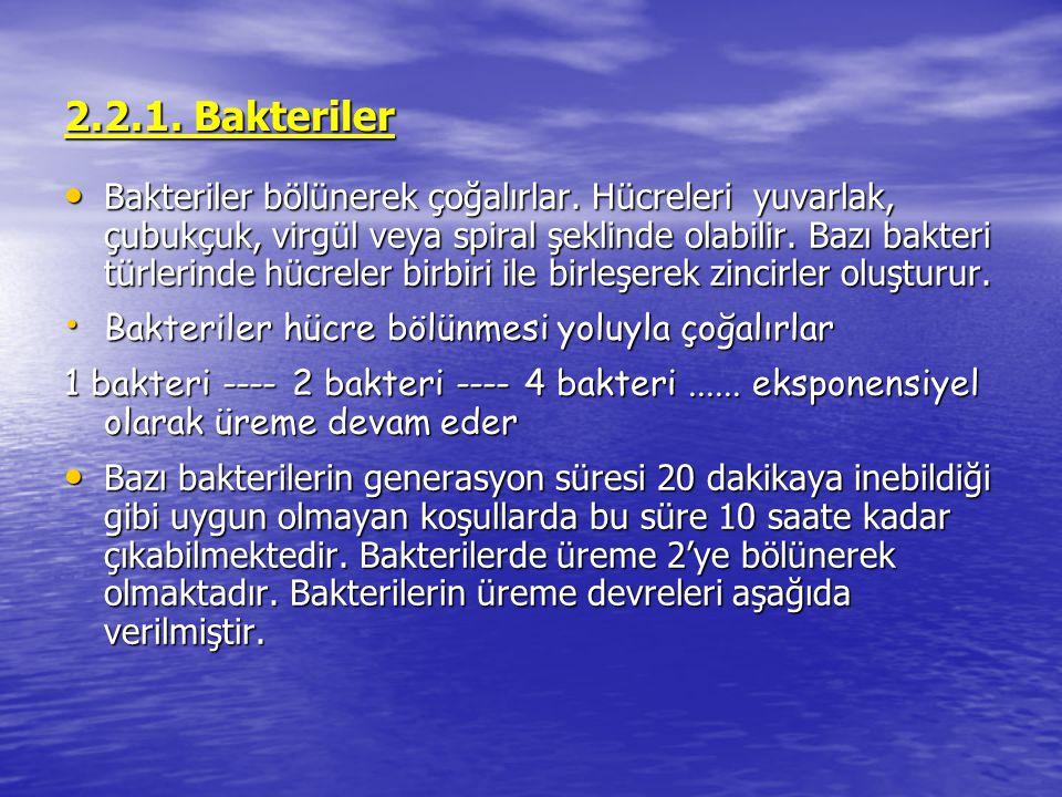 2.2.1. Bakteriler