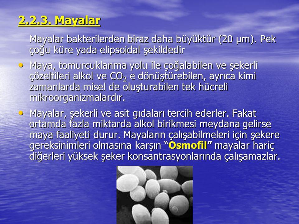 2.2.3. Mayalar Mayalar bakterilerden biraz daha büyüktür (20 μm). Pek çoğu küre yada elipsoidal şekildedir.