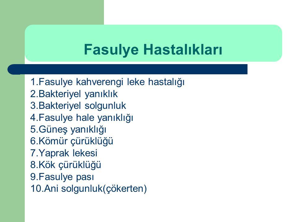 Fasulye Hastalıkları 1.Fasulye kahverengi leke hastalığı