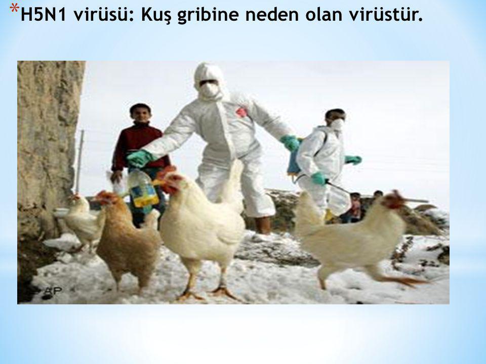 H5N1 virüsü: Kuş gribine neden olan virüstür.