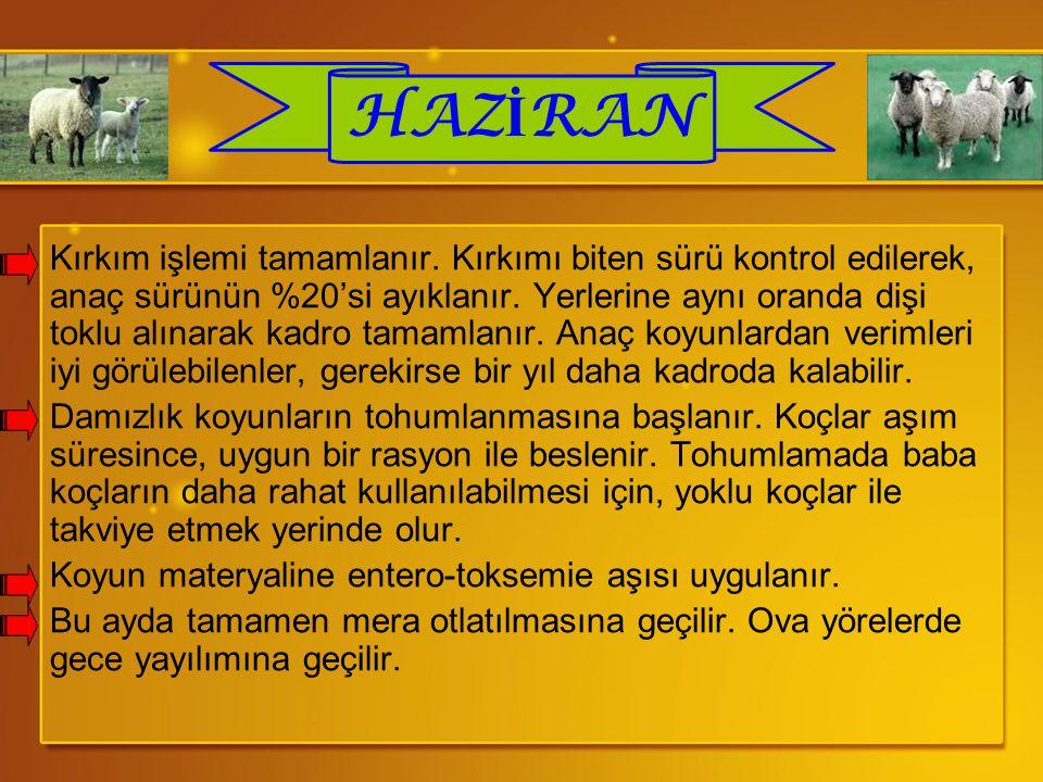 HAZİRAN