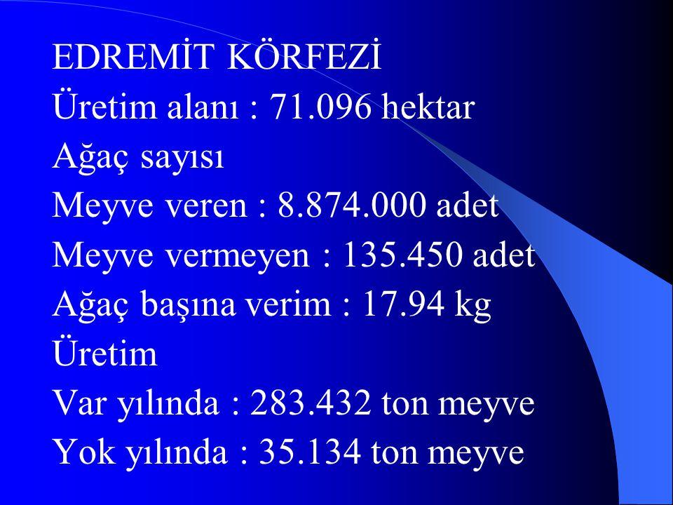 EDREMİT KÖRFEZİ Üretim alanı : 71.096 hektar. Ağaç sayısı. Meyve veren : 8.874.000 adet. Meyve vermeyen : 135.450 adet.