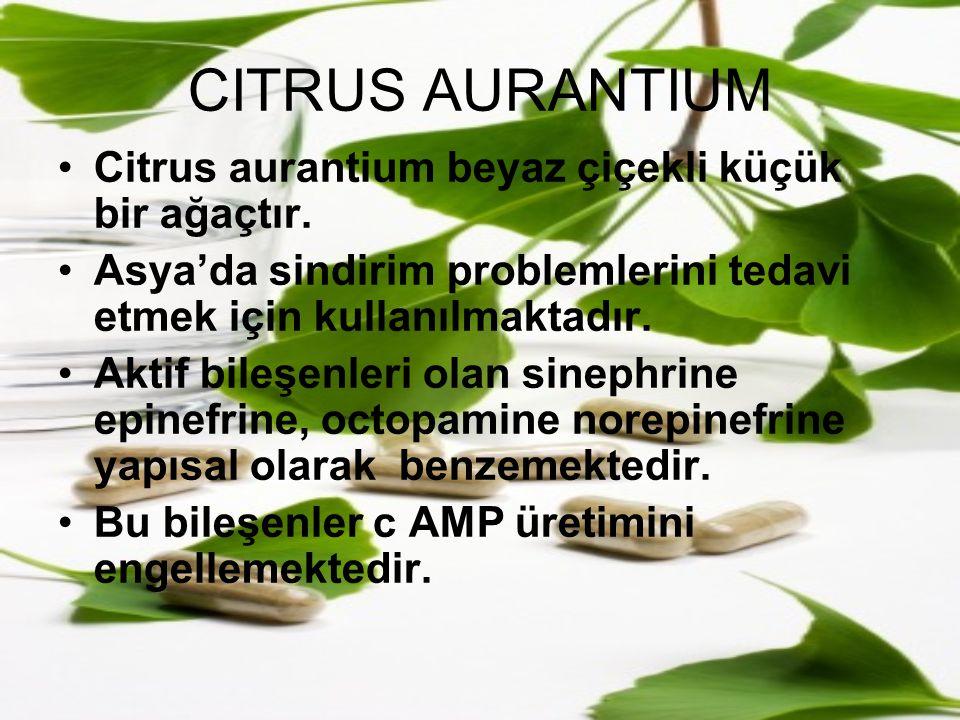 CITRUS AURANTIUM Citrus aurantium beyaz çiçekli küçük bir ağaçtır.