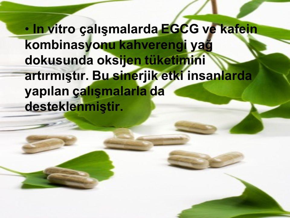 In vitro çalışmalarda EGCG ve kafein kombinasyonu kahverengi yağ dokusunda oksijen tüketimini artırmıştır.