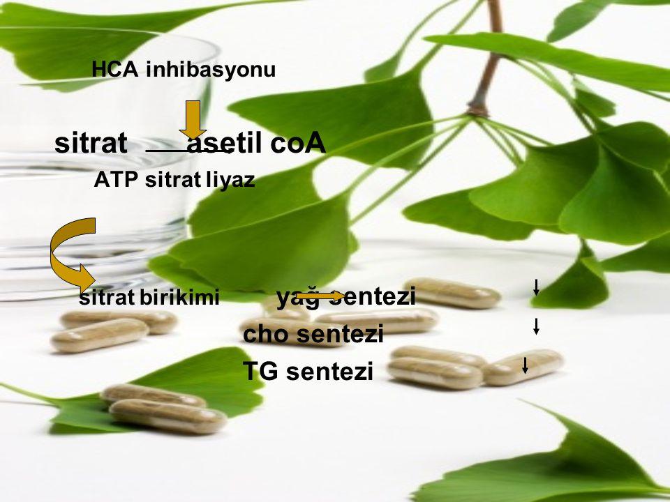 HCA inhibasyonu sitrat asetil coA cho sentezi TG sentezi