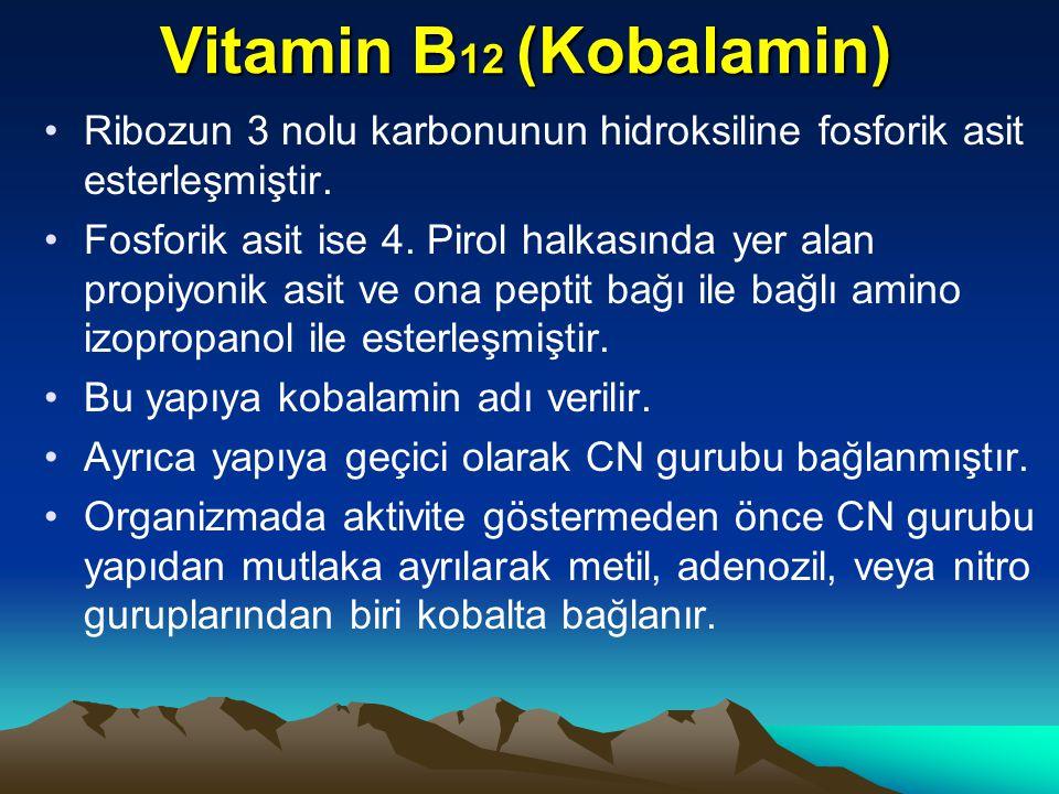 Vitamin B12 (Kobalamin) Ribozun 3 nolu karbonunun hidroksiline fosforik asit esterleşmiştir.