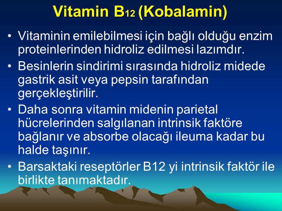 Vitamin B12 (Kobalamin) Vitaminin emilebilmesi için bağlı olduğu enzim proteinlerinden hidroliz edilmesi lazımdır.