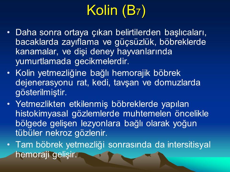 Kolin (B7)