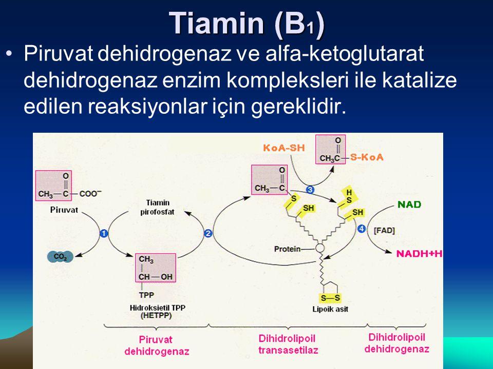 Tiamin (B1) Piruvat dehidrogenaz ve alfa-ketoglutarat dehidrogenaz enzim kompleksleri ile katalize edilen reaksiyonlar için gereklidir.