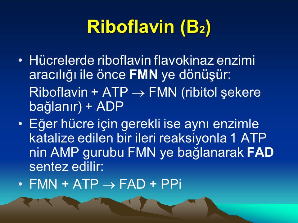 Riboflavin (B2) Hücrelerde riboflavin flavokinaz enzimi aracılığı ile önce FMN ye dönüşür: Riboflavin + ATP  FMN (ribitol şekere bağlanır) + ADP.