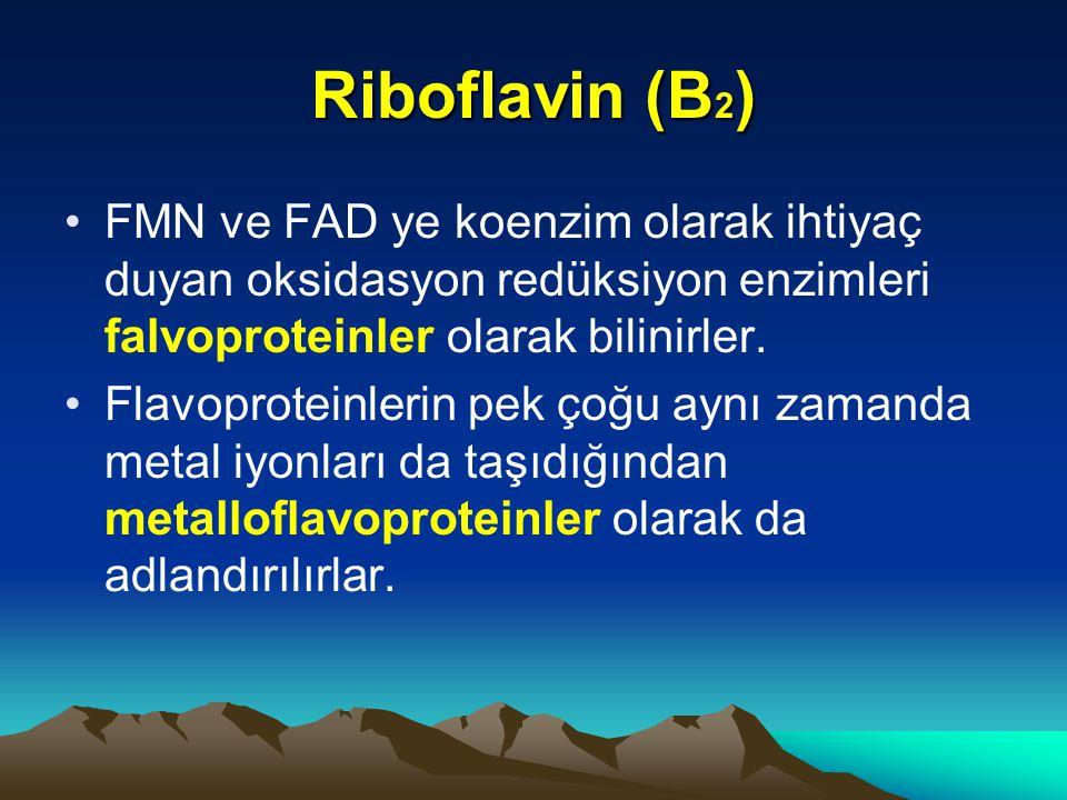 Riboflavin (B2) FMN ve FAD ye koenzim olarak ihtiyaç duyan oksidasyon redüksiyon enzimleri falvoproteinler olarak bilinirler.