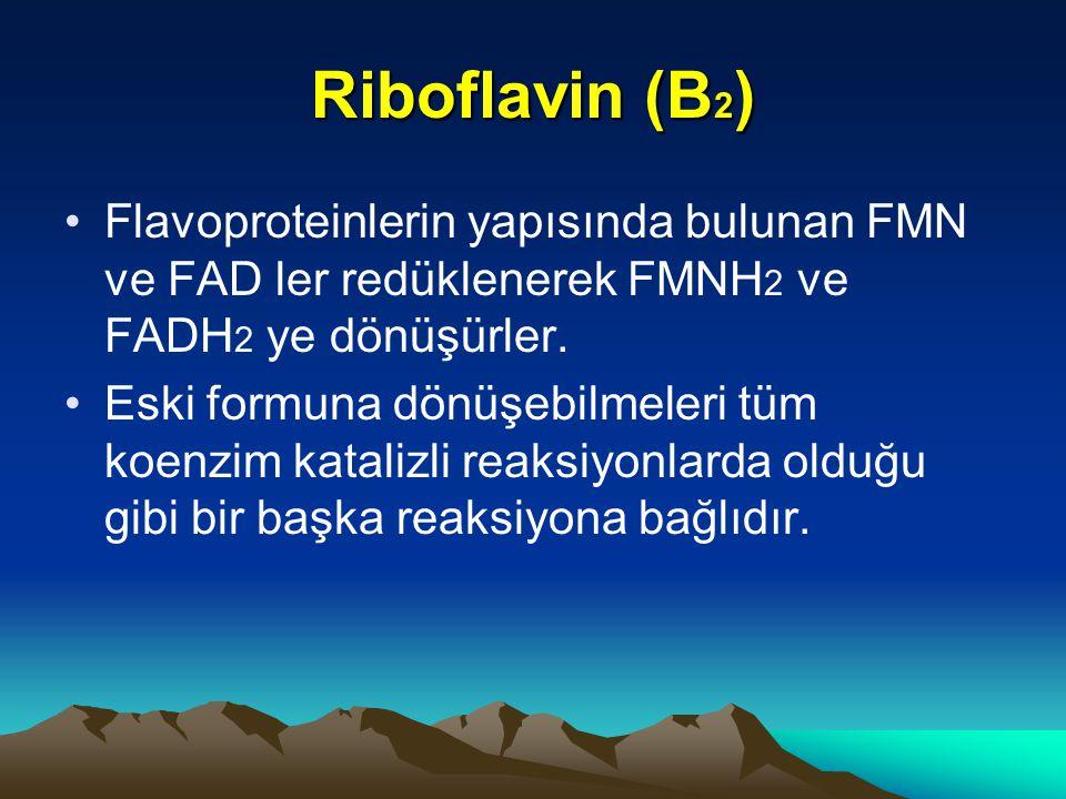 Riboflavin (B2) Flavoproteinlerin yapısında bulunan FMN ve FAD ler redüklenerek FMNH2 ve FADH2 ye dönüşürler.
