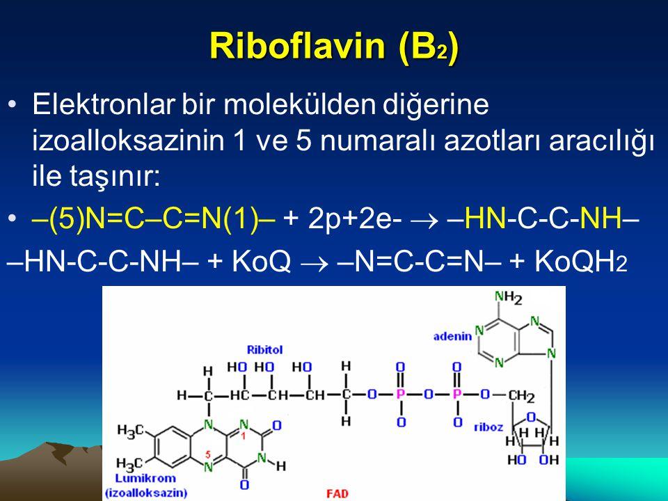 Riboflavin (B2) Elektronlar bir molekülden diğerine izoalloksazinin 1 ve 5 numaralı azotları aracılığı ile taşınır: