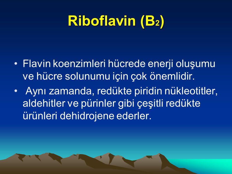 Riboflavin (B2) Flavin koenzimleri hücrede enerji oluşumu ve hücre solunumu için çok önemlidir.