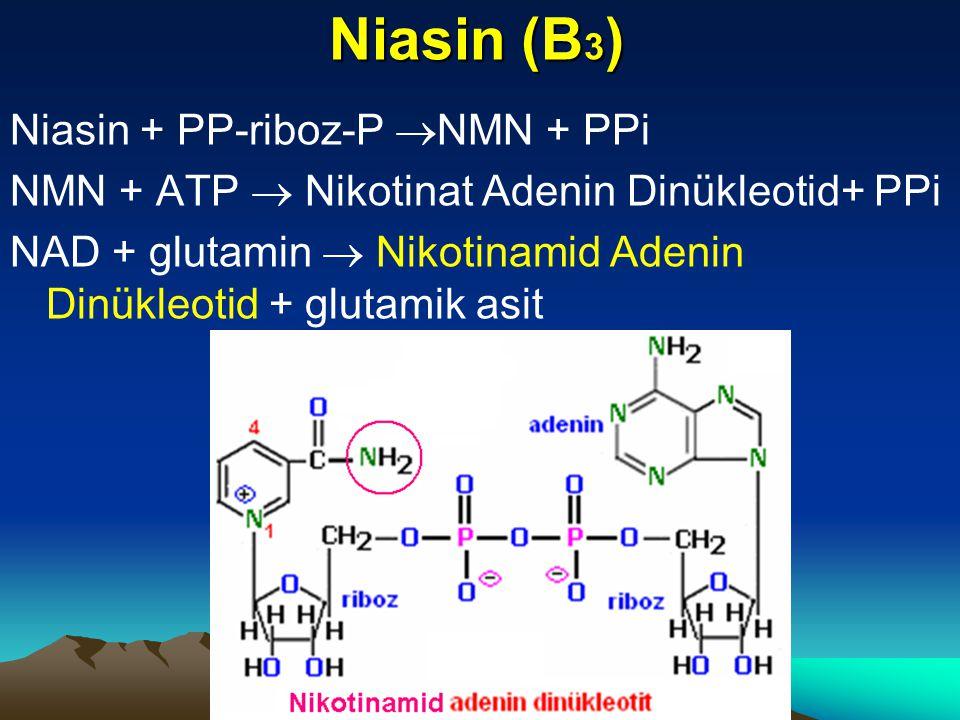 Niasin (B3) Niasin + PP-riboz-P NMN + PPi