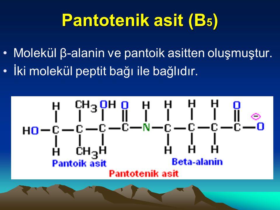 Pantotenik asit (B5) Molekül β-alanin ve pantoik asitten oluşmuştur.