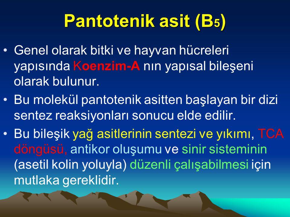Pantotenik asit (B5) Genel olarak bitki ve hayvan hücreleri yapısında Koenzim-A nın yapısal bileşeni olarak bulunur.