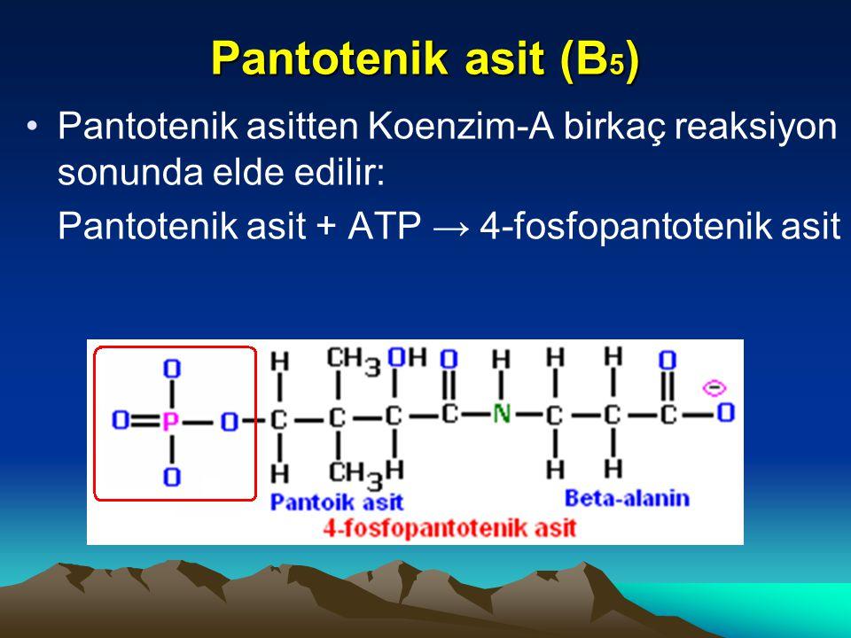 Pantotenik asit (B5) Pantotenik asitten Koenzim-A birkaç reaksiyon sonunda elde edilir: Pantotenik asit + ATP → 4-fosfopantotenik asit.