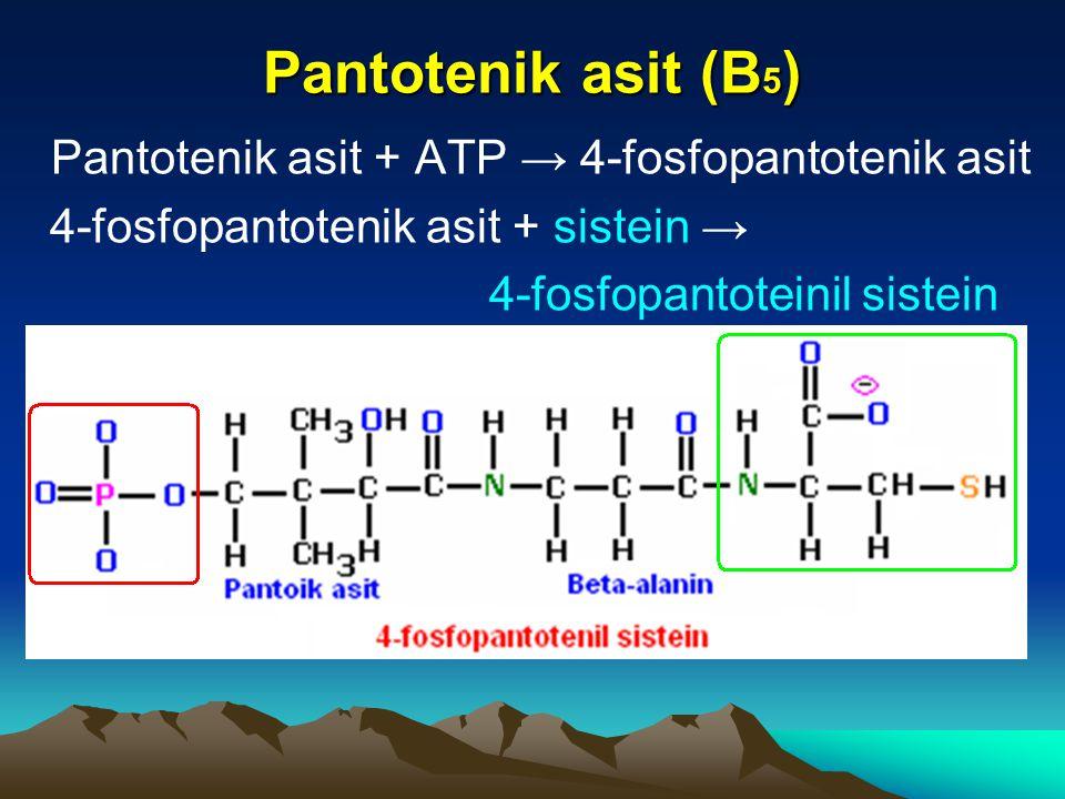 Pantotenik asit (B5) Pantotenik asit + ATP → 4-fosfopantotenik asit