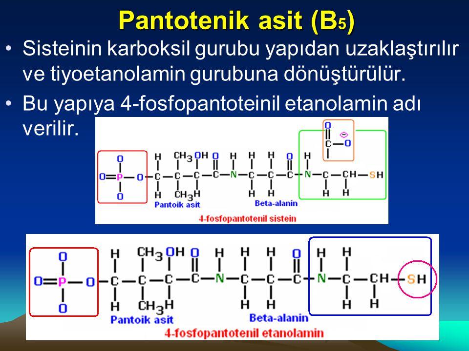 Pantotenik asit (B5) Sisteinin karboksil gurubu yapıdan uzaklaştırılır ve tiyoetanolamin gurubuna dönüştürülür.