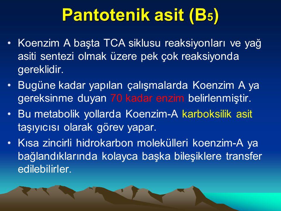 Pantotenik asit (B5) Koenzim A başta TCA siklusu reaksiyonları ve yağ asiti sentezi olmak üzere pek çok reaksiyonda gereklidir.