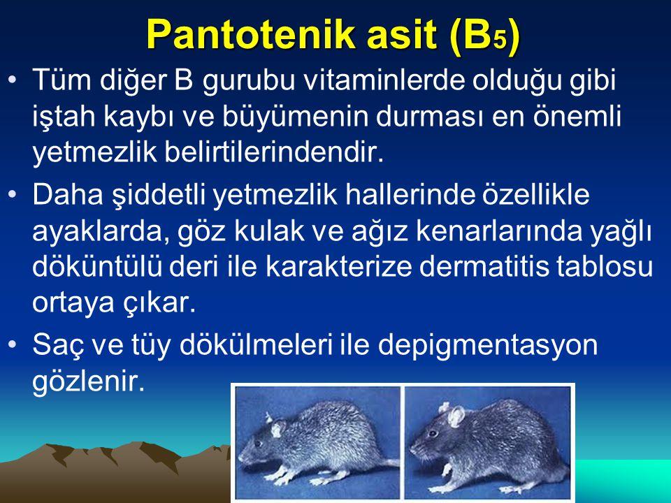 Pantotenik asit (B5) Tüm diğer B gurubu vitaminlerde olduğu gibi iştah kaybı ve büyümenin durması en önemli yetmezlik belirtilerindendir.