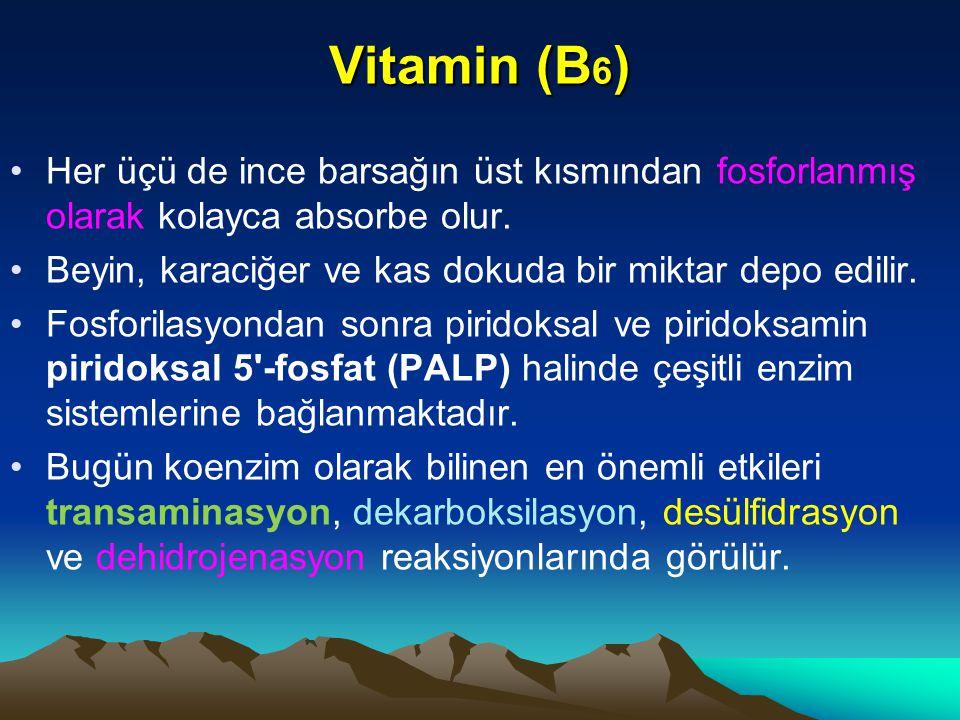 Vitamin (B6) Her üçü de ince barsağın üst kısmından fosforlanmış olarak kolayca absorbe olur. Beyin, karaciğer ve kas dokuda bir miktar depo edilir.