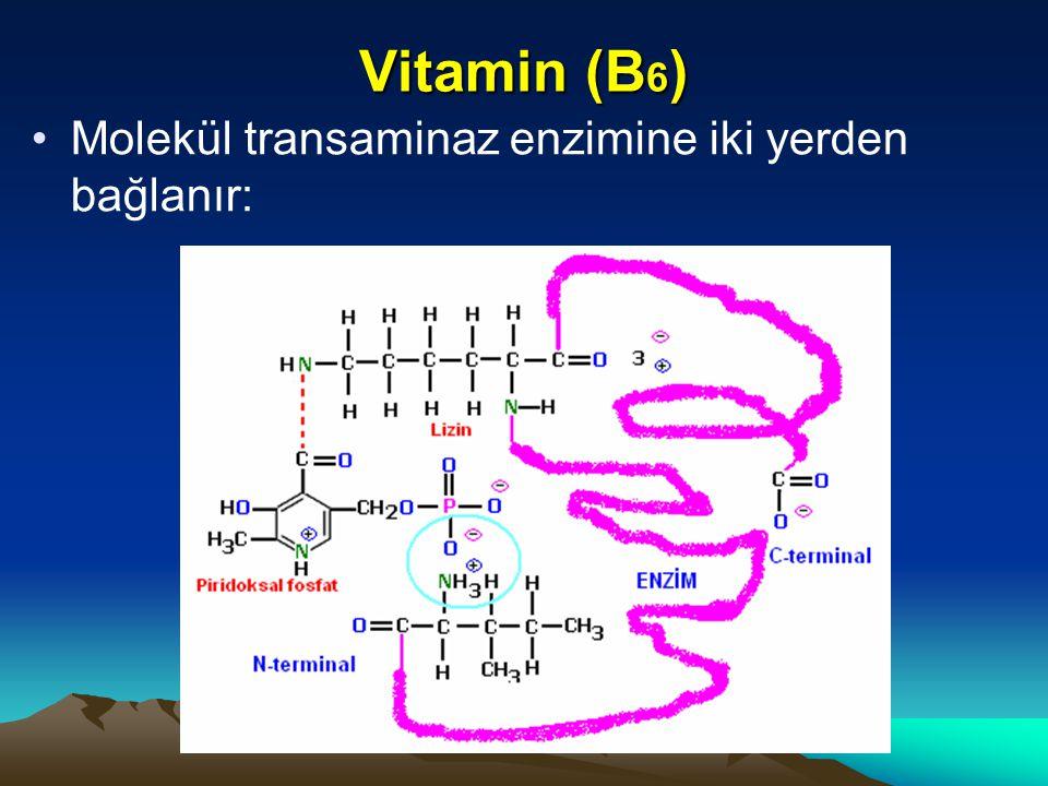 Vitamin (B6) Molekül transaminaz enzimine iki yerden bağlanır: