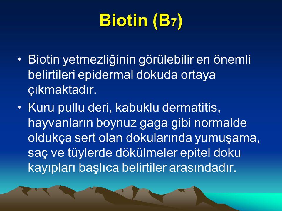 Biotin (B7) Biotin yetmezliğinin görülebilir en önemli belirtileri epidermal dokuda ortaya çıkmaktadır.