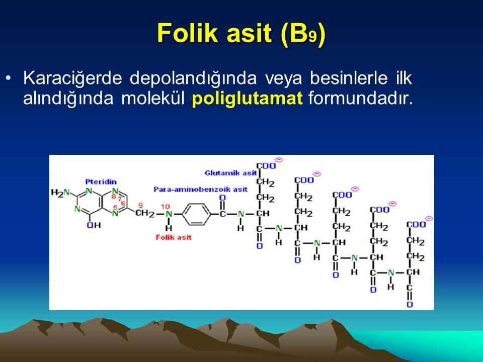 Folik asit (B9) Karaciğerde depolandığında veya besinlerle ilk alındığında molekül poliglutamat formundadır.