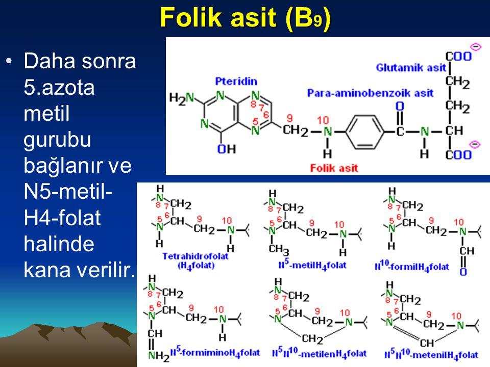 Folik asit (B9) Daha sonra 5.azota metil gurubu bağlanır ve N5-metil-H4-folat halinde kana verilir.